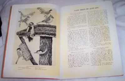 Image for Park Birds, Plates and Text by Wallace Hughes, Tulsa, Oklahoma