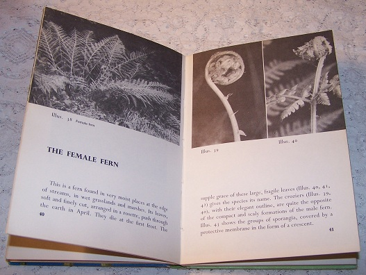 Image for a Fern is Born