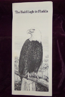 Image for The Bald Eagle in Florida